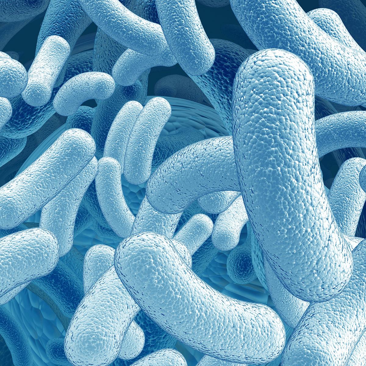 probiotics probioplus 4 food